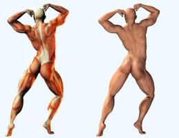 izmok-anatomiaja-testepito-poz